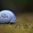 Little Blue Shell by salsbells69