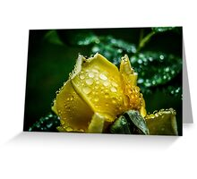 Delicate Drops Greeting Card