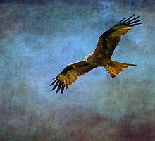 Red Kite  (Milvus-milvus)   by chris2766