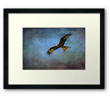 Red Kite  (Milvus-milvus)   Framed Print