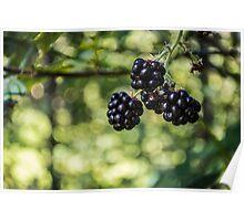 Berry Bokeh Poster