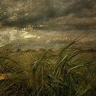 Storm by Sarah Jarrett
