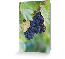 grape and vineyard Greeting Card