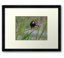 BIRD BRAIN! Framed Print