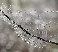 Forest Jewels, spiderweb, Canon EOS 10D by Leonie Mac Lean