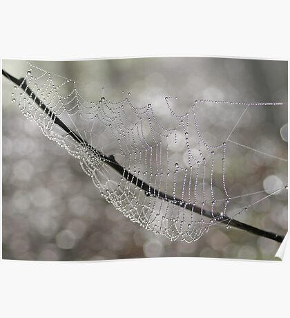 Forest Jewels, spiderweb, Canon EOS 10D Poster