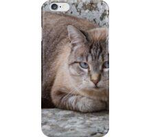 a cute cat iPhone Case/Skin