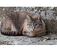 a cute cat Photographic Print