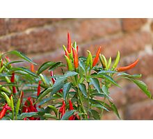 red chili Photographic Print