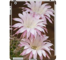 scenic flower of a cactus plant iPad Case/Skin