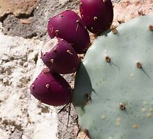 cactus in bloom by spetenfia