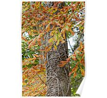 tree in autumn Poster