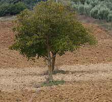 one tree in the hilly landscape by spetenfia
