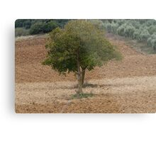 one tree in the hilly landscape Metal Print
