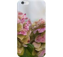 hydrangea in garden iPhone Case/Skin