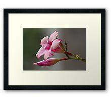 pink flower in the garden Framed Print