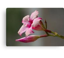 pink flower in the garden Canvas Print