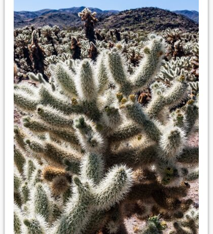 A field of cacti Sticker