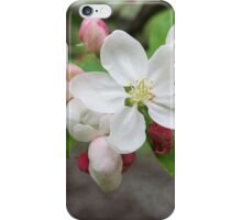White blossom and pink buds - 2011 iPhone Case/Skin