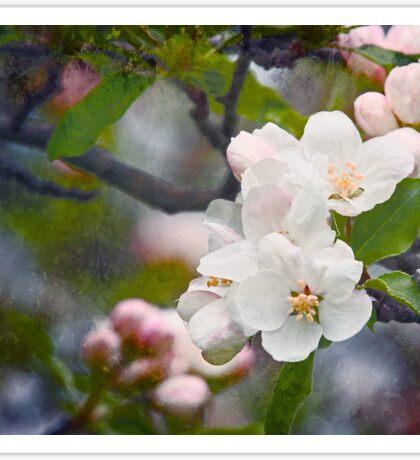 White Spring Easter Flowers Sticker