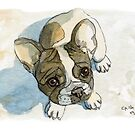 French Bulldog Puppy 456 by schukinart