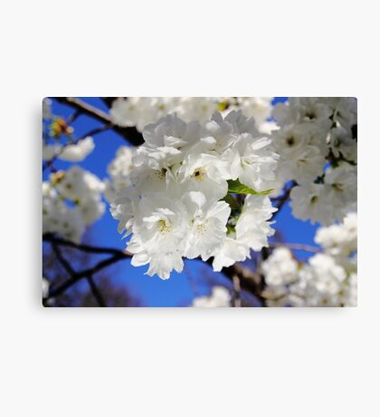 Irish Spring2 Canvas Print