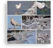 On Seagull Shores Canvas Print