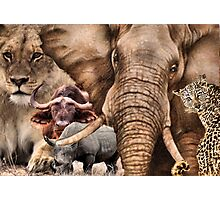 """A COLLAGE OF AFRICA'S """"BIG 5"""" -  Photographic Print"""