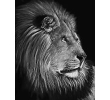 A Watchful Eye - lion Photographic Print