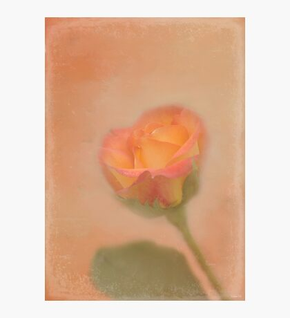 Rose Whispers Photographic Print