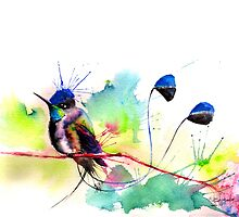 """Spatuletail Hummingbird"" by IsabelSalvador"