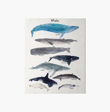 whales Art Board
