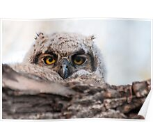 Owlet in the morning Poster