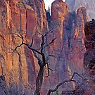 Zion Evening by Harry Oldmeadow