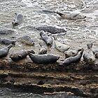 Seals at the Spa by Martha Sherman