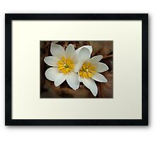 First Blossoms Framed Print