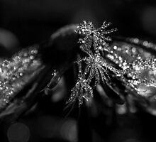 Frosty Dandelion by Mudgers