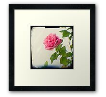A single pink rose Framed Print