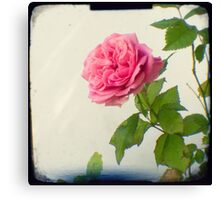 A single pink rose Canvas Print