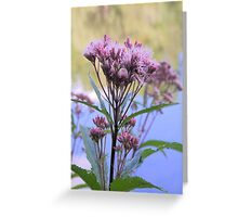 Spotted Joe Pye Weed Greeting Card