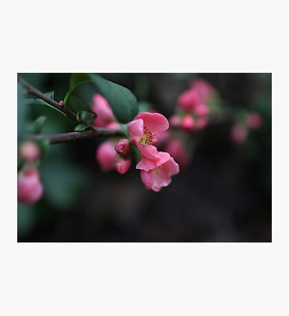 pink flowers up close Photographic Print