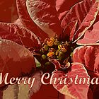 Pink and White Poinsettia Merry  by Catherine Sherman