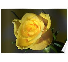 Yellow Rose At Night. Poster