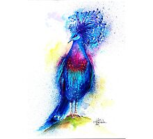 """Blue Crowned Pigeon"" by IsabelSalvador"