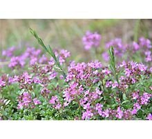 Pink Little Flowers Photographic Print