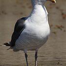 Seagull by Kimberly Palmer