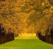 Camperdown Colour by ImagesbyDi