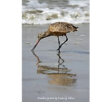 Marbled Godwit Photographic Print