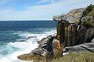 South Head, Sydney Harbour by Trish Meyer