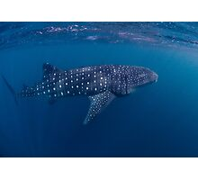 Giant from the Deep, Ningaloo, Western Australia Photographic Print